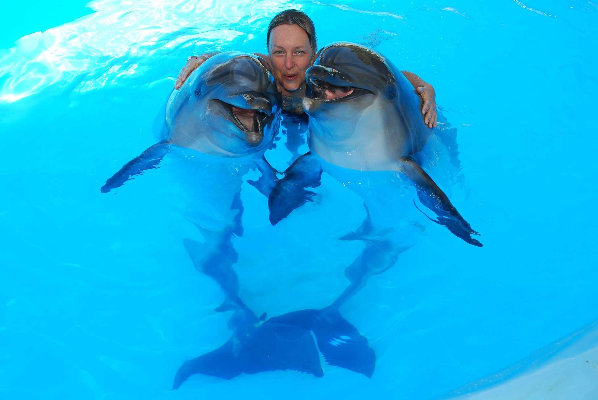Подарки плавание с дельфинами 381